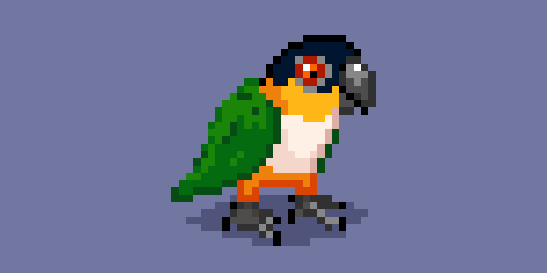 A white-bellied caique